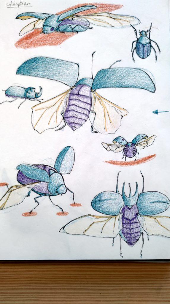 dessin d'un coléoptère sous différents angles