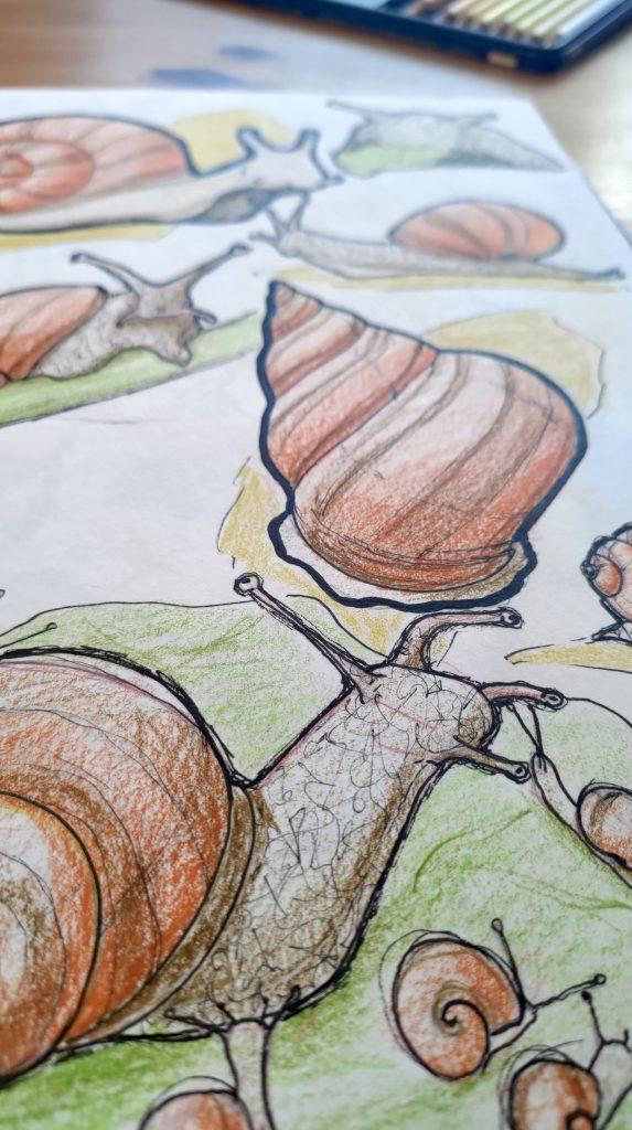 dessin d'escargots grands et petits, coquille seule